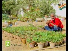 MasalaTV - Tofiq Pasha - 26-Feb-2010 - 2956
