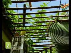 MasalaTV - Tofiq Pasha - 01-Mar-2010 - 3000