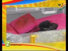 MasalaTV - Zubaida Tariq - 01-May-2010 - 3959