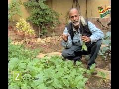 MasalaTV - Tofiq Pasha - 21-Nov-2010 - 7248